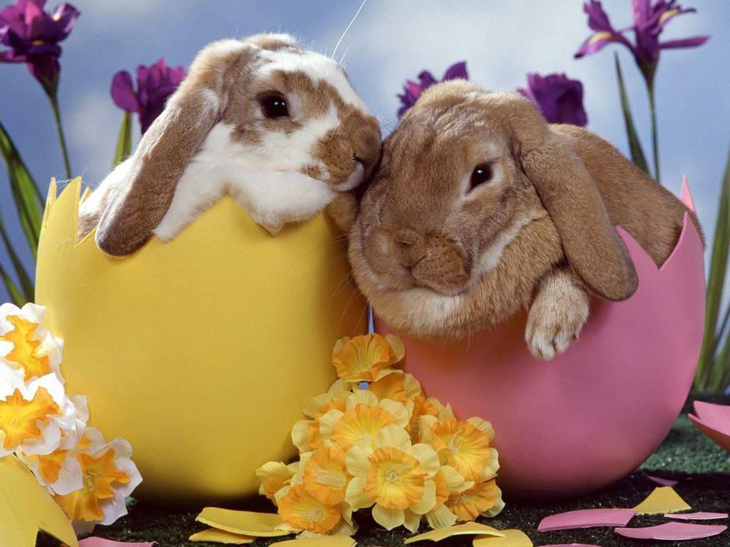 sretan uskrs slika Uskršnje slike za radnu površinu | Oblak Znanja sretan uskrs slika